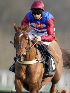 Johnny Ward: 'Cheltenham without people will not be nearly the same'