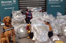 Revenue seizes €1.2 million worth of cannabis at Dublin Port