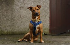 Dogs Trust charity received 172 requests over Chrismas from people wanting to surrender their pet