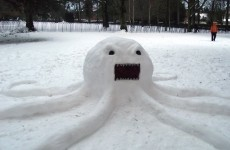 Forget Paul the octopus: meet Sneachta-pus