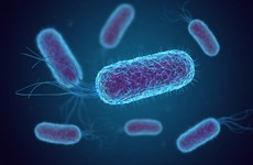 E. coli outbreak identified at setting in Mid-West region