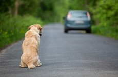 Your evening longread: Why animals don't get lost