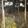 Man arrested after gardaí uncover 'sophisticated cannabis grow house'