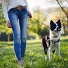 Poll: Have you noticed more dog fouling in your area recently?
