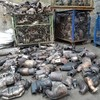 Gardaí seize 300 catalytic converters following search in north Dublin