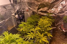 Gardaí find suspected cannabis growhouse inside converted horsebox in Tipperary