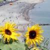 Poll: When it's sunny in Ireland, do you wear sunscreen?
