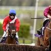 Cheltenham victor Minella Indo tops 11 in Punchestown mix