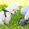 Dog poo DNA testing to be launched in Leitrim to find owners who don't clean up