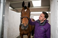 Gold Cup hero Minella Indo ruled out of Punchestown with bruised foot