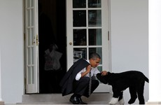 Obama family mourns death of White House dog Bo