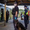 Gardaí deploy undercover units on Dart line to stamp out spate of anti-social behaviour
