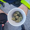 A conviction for €4 worth of cannabis 'just defies logic', say campaigners