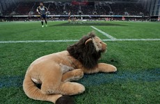 16,500 fans to be allowed for Lions opener against Japan in Murrayfield