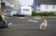 Rat infestations and overcrowding: Probe into Cork halting site exposes dangerous living conditions
