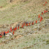 China probes deaths of 21 runners after freak weather hits ultramarathon