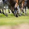 Galway trainer Stephen Mahon handed four-year ban for breaches including neglect
