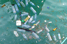 Microplastics in Irish waters 'pass up the food chain' into systems of humans and larger animals