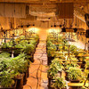 Man arrested after €592k worth of suspected cannabis seized during raid in Co Roscommon