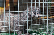 'No longer appropriate': Cabinet signs off on fur farming  ban and compensation scheme for farmers
