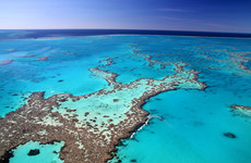 Australia says it will oppose UN plan to list Great Barrier Reef as being 'in danger'