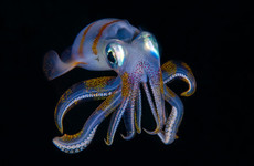 Quiz: How much do you know about squids?