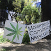 Mexico top court decriminalises recreational marijuana use