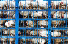 EU Parliament votes overwhelmingly to ban caged animal farming by 2027
