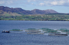 Licence granted for large salmon farm in Bantry Bay despite strong opposition