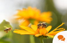 Opinion: Bees and agriculture need each other - we should class bees as livestock to protect them