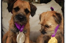 Andy Murray is using his Olympic medals as dog collars