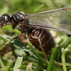 Large swarms of flying ants predicted for Euro 2020 final in Wembley
