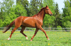 Almost 20,000 horses euthanised after being seized by local authorities over past ten years