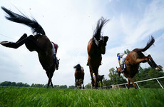 BBC Panorama documentary to focus on fate of ex-racehorses