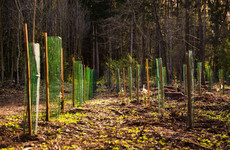 Governments hiding behind 'unproven' net-zero carbon targets - Oxfam report