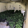 Half a million euro worth of cannabis plant and herb seized at Navan growhouse