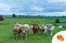 Opinion: 'The shift coming in Irish agriculture must be transformational - but it will be positive too'