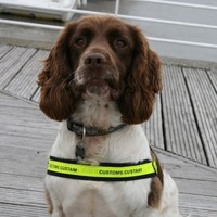 Over 14kg of cannabis resin discovered at Rosslare after alert from sniffer dog