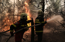 Almost 100,000 hectares of forest burned in Greece in less than two weeks