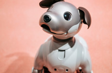 Sitdown Sunday: Can you love a robot dog?
