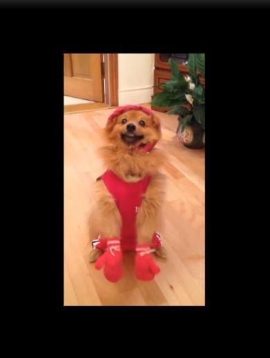Katie's secret mascot: Yogi the dog supports the golden girl