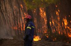 Greek megafires highlight failure to prepare, experts say