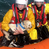 Waterford RNLI rescue dog after 30m cliff fall