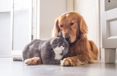Poll: Are you a dog or a cat person?