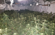 Three men arrested after €384k worth of cannabis plants seized in large scale operation