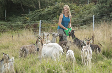 Goat this: Old Irish Goats reintroduced to Howth after nearly a century to help prevent fires