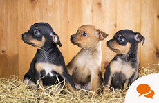 Lynn Boylan: Illegal sale of puppies online can no longer be ignored