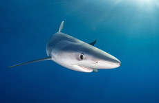 More than 3,000 shark fins confiscated in Colombia