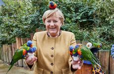 Merkel makes final push for successor in Germany's knife-edge polls
