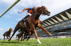 Disappointment for Aidan O'Brien as Love ruled out of Prix de l'Arc de Triomphe